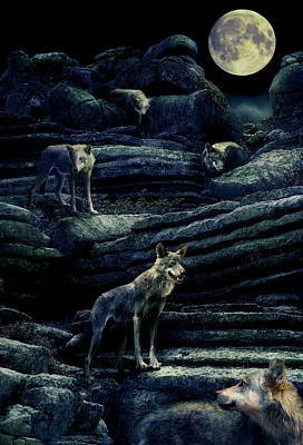 Moonlit Night Photograph -  Moonlit Wolf Pack by Mal Bray
