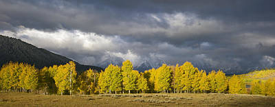 Beastie Boys -  Morning Aspen as the Storm clears by Gary Langley