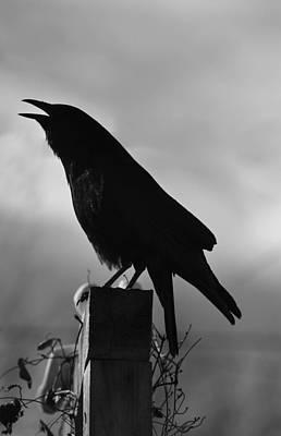 Photograph -   Mother Crow  In Black by Rae Ann  M Garrett