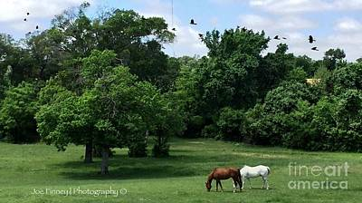 Photograph -  Mr. And Mrs. Horse - No. 195 by Joe Finney