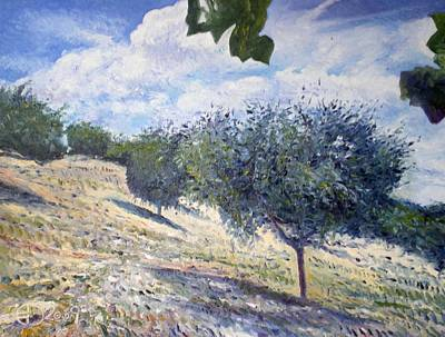 Olive Grove At Monte Cardeto Lazio Italy 2009  Art Print by Enver Larney