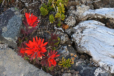 Photograph -  Paintbrush by Gary Wing