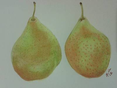 Drawing -  Pair Of Pears by Ekta Gupta