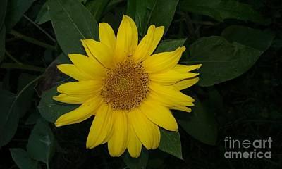 Travel -  Petite Sunflower by Seaux-N-Seau Soileau