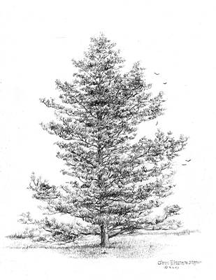 Pine Art Print by Jim Hubbard