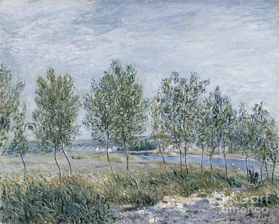 Poplar Painting -  Poplars On A River Bank by Celestial Images