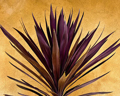 New Mexico Photograph -  Purple Giant Dracaena Santa Fe by John Hansen