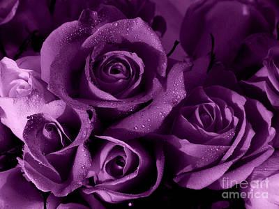 Photograph -  Purple Haze by Nancie DeMellia