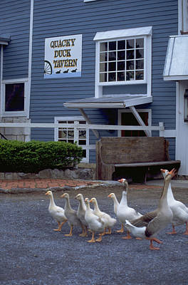 Just Desserts -  Quacky Duck Tavern by Carl Purcell