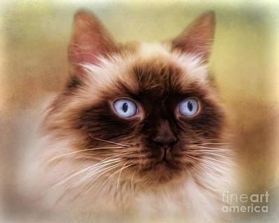 Digital Art -  Ragdoll Cat by Trudi Simmonds