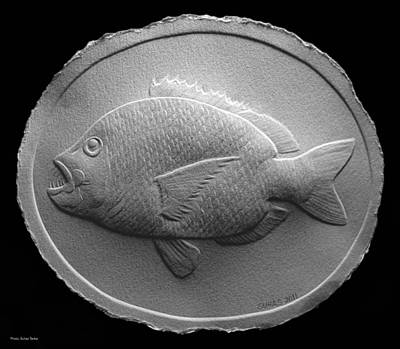 Relief Saltwater Fish Drawing Art Print