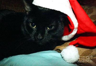 Photograph -  Santa Claws by Robyn King