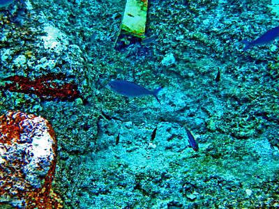 Sea. Rusty Iron And Blue Fish.    Original by Andy Za