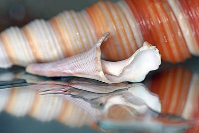 Photograph -  Seashells And Water Reflections by Angela Murdock