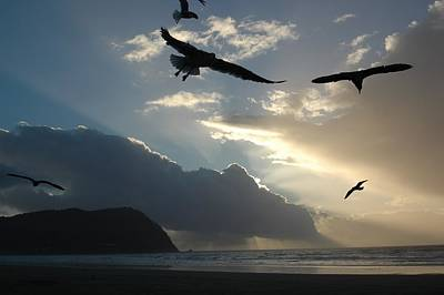Photograph -  Sky Birds 1 by Sara Stevenson