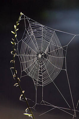 Spiderweb Photograph -  Spider's Artwork by Ross Powell