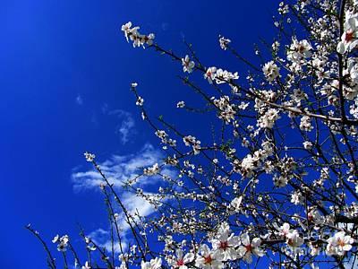 Photograph - '' Spring 11 '' by Vassilis Tagoudis