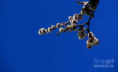 Photograph - '' Spring 12 '' by Vassilis Tagoudis