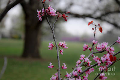 Photograph -  Spring  by Barbara Dean