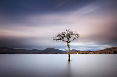 Photograph -  Sunlit Tree by Grant Glendinning