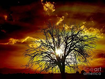 Photograph - '' Sunset Tree ''  by Vassilis Tagoudis