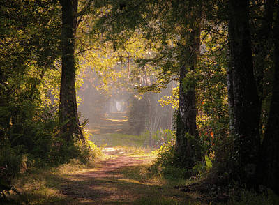 Swamp Trail Art Print