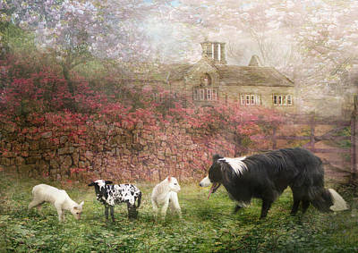 Collie Wall Art - Photograph -  The Babysitter by Trudi Simmonds