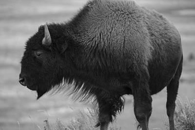 Photograph -  The Beauty Of Yellowstone by Rae Ann  M Garrett