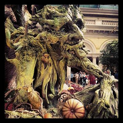 Decorative Photograph - #trollgarden by Raymie Jackman