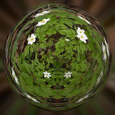 This Little Anemone  Planet 4 Art Print by Jouko Lehto