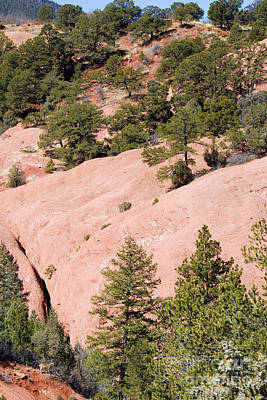 Photograph -  Tiny Mule Deer In Red Rock Canyon by Steve Krull