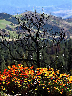 Photograph -  Tree And Poppies by Gary Brandes