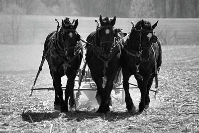Photograph -  Tres Amigos 1634 by Guy Whiteley