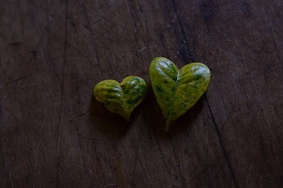 Photograph -  Two Of Hearts, The Gift Of The Jasmine by Rae Ann  M Garrett