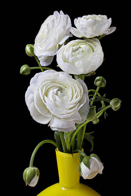 White Ranunculus Flower Photograph -   White Ranunculus In Yellow Vase by Garry Gay