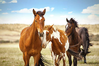 Photograph -  Wild Herd Of Mustang Horses by Jerry Cowart