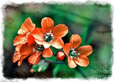 Photograph -  Wildflowers 5 -  Polemonium Reptans  - Digital Paint 3 by Debbie Portwood
