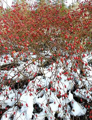 Photograph -  Winter Harvest 2 by Will Borden