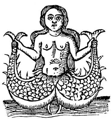 Painting - Mermaid, 1520 by Granger