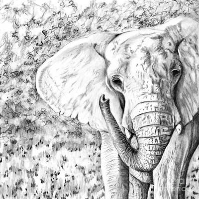 Drawing - 01 Of 30 Elephant by Denise Deiloh