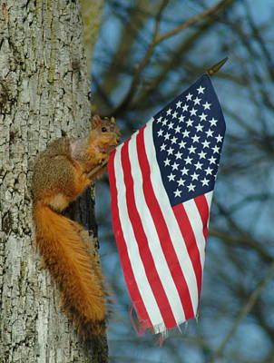 010510-4   One Patriotic Squirrel Art Print by Mike Davis