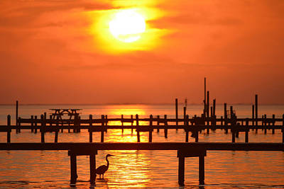 Photograph - 0131 Heron Fishes Under Pier At Sunset On Sound by Jeff at JSJ Photography