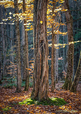 Photograph - #0187 - Dummerston, Vermont by Heidi Osgood-Metcalf