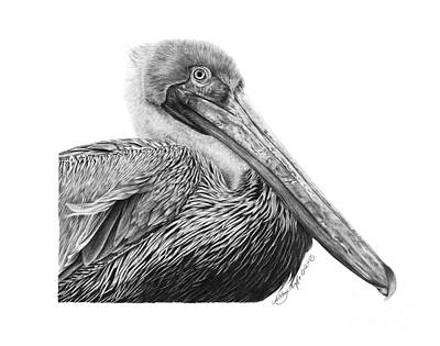 047 - Sinbad The Pelican Art Print