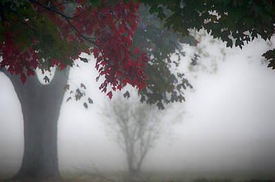 Target Threshold Nature - #05 Autumn in the Mist by John Diebolt