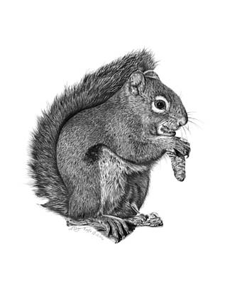 Drawing - 058 Sweeney The Squirrel by Abbey Noelle