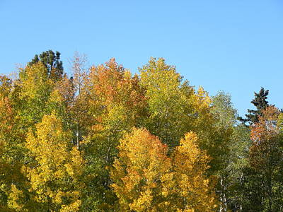 Photograph - Fall In Divide Co by Margarethe Binkley