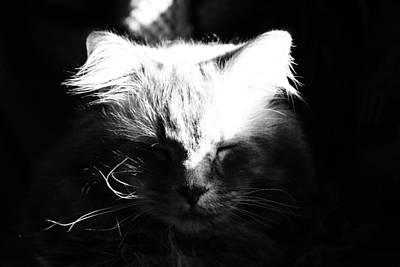 Photograph -  Ming by Rae Ann  M Garrett