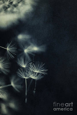 Whispers In The Dark 2 Art Print by Priska Wettstein