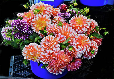 Photograph - 2016 Monona Farmers' Market Bucket Of Dahlias by Janis Nussbaum Senungetuk